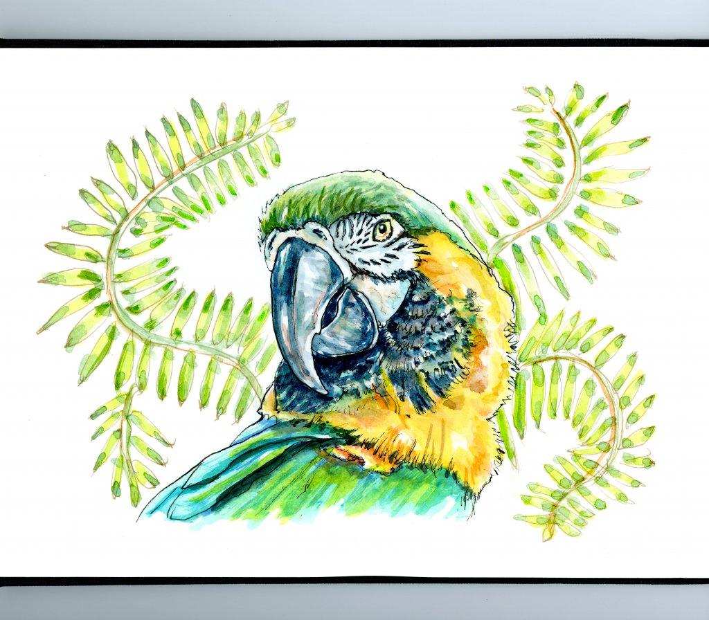 Macaw Watercolor Illustration Sketchbook Detail