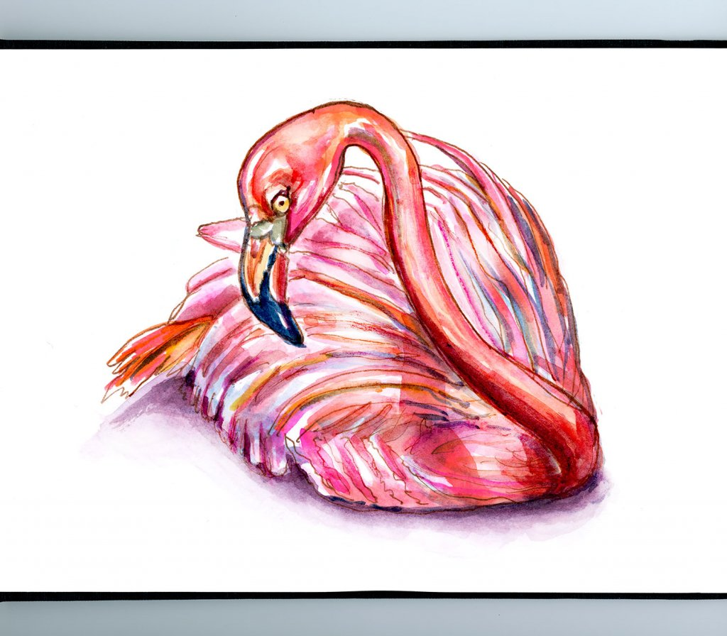 Flamingo Sitting Laying Down Watercolor Illustration Sketchbook Detail