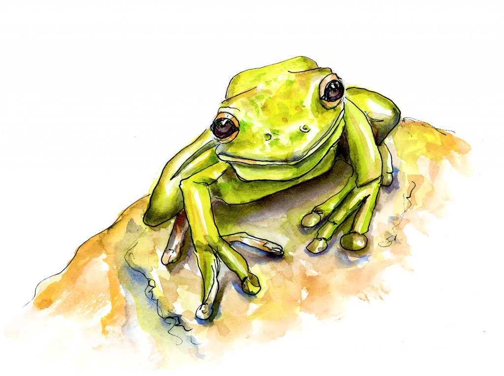 Cute Frog Watercolor Illustration