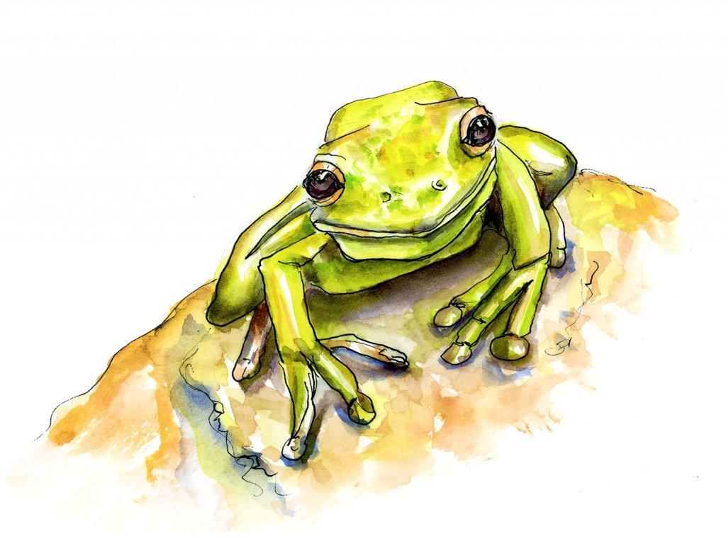 Cute Frog Watercolor Illustration