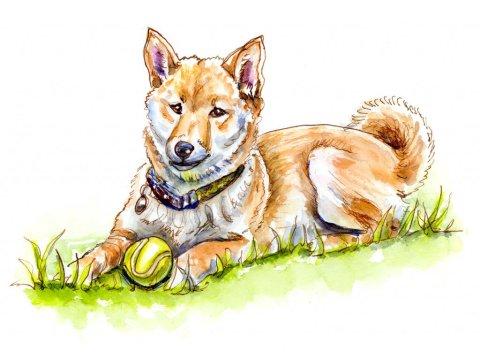 Shiba Inu Watercolor Illustration