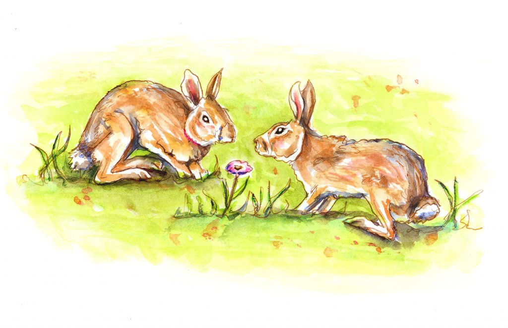Two Rabbits Bunnies Watercolor Illustration