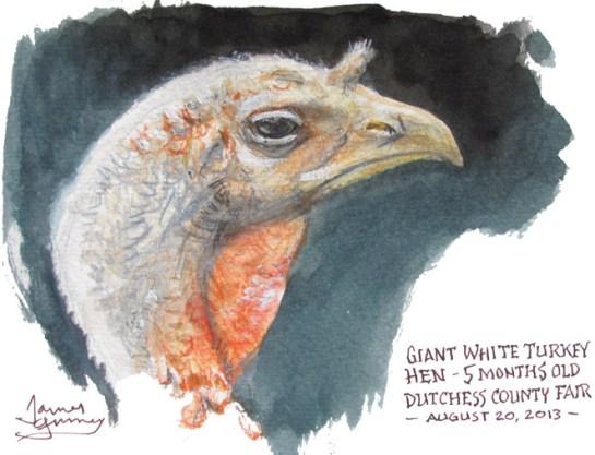Turkey Hen Illustration Watercolor Sketch James Gurney