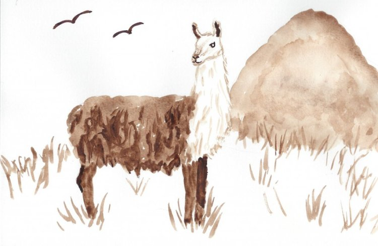 Monochrome llama. Llamas grow fiber, not fur, but they are definitely some of our favorite fluffy cr