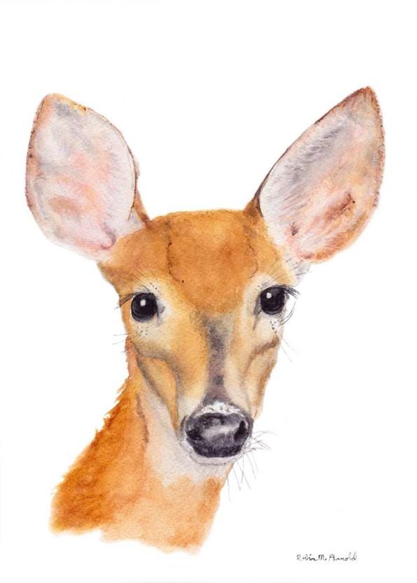 Deer Watercolor by Robin Arnold