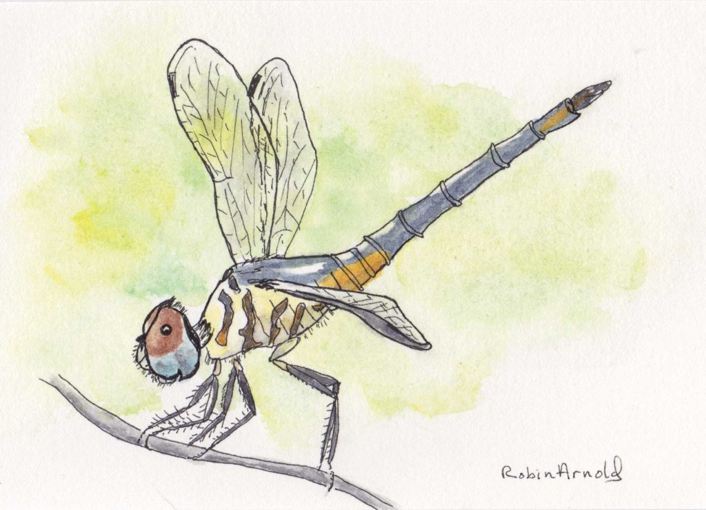 Smiling dragonfly. Day 4 of World Watercolor Month and I've completed a simple watercolor ever