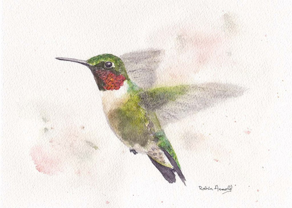 Hummingbird Watercolor by Robin Arnold