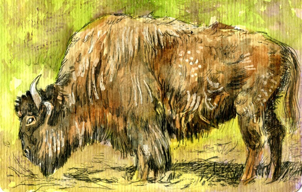 Hahnemühle Postcards Painting Example Buffalo by Sandra Strait