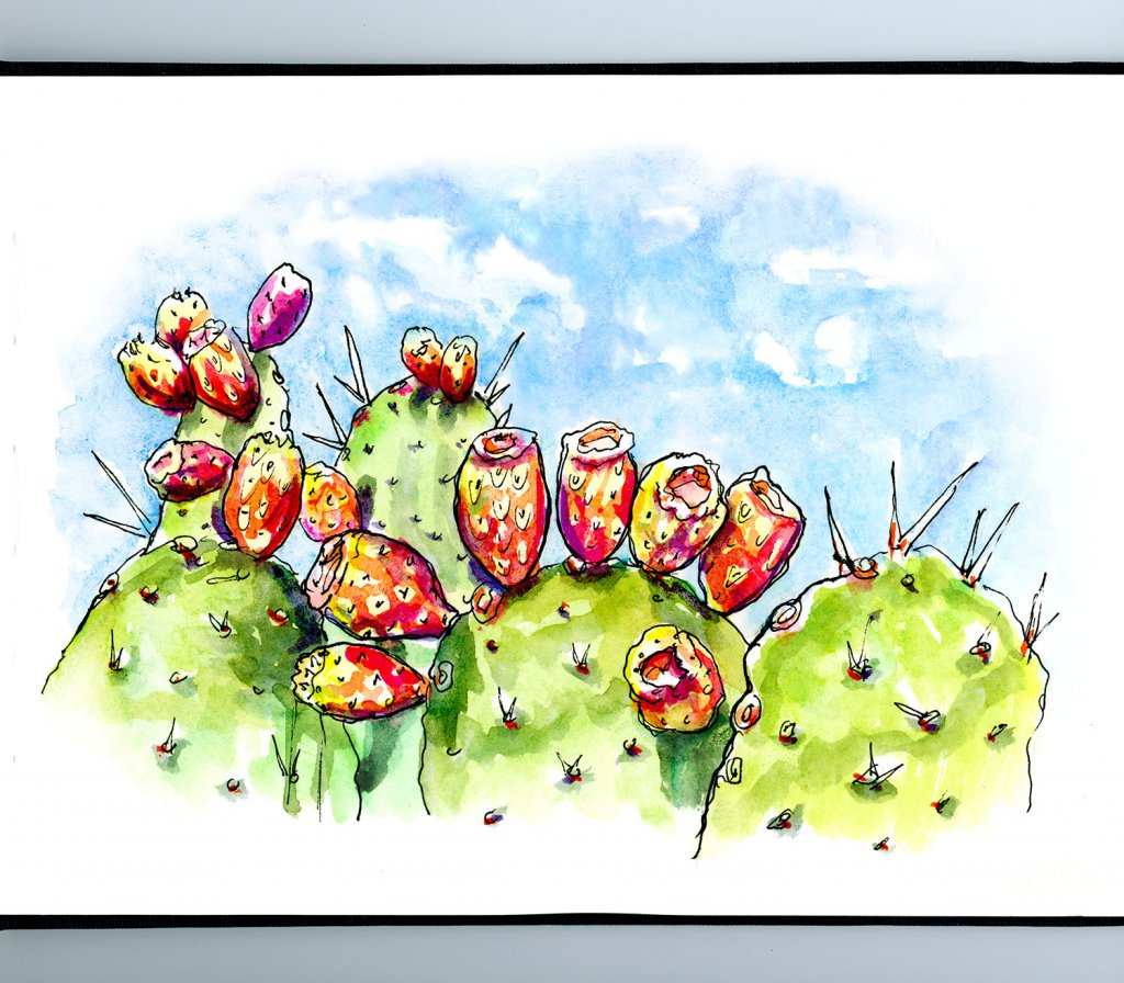 Cactus Blooms Watercolor Illustration Sketchbook Detail