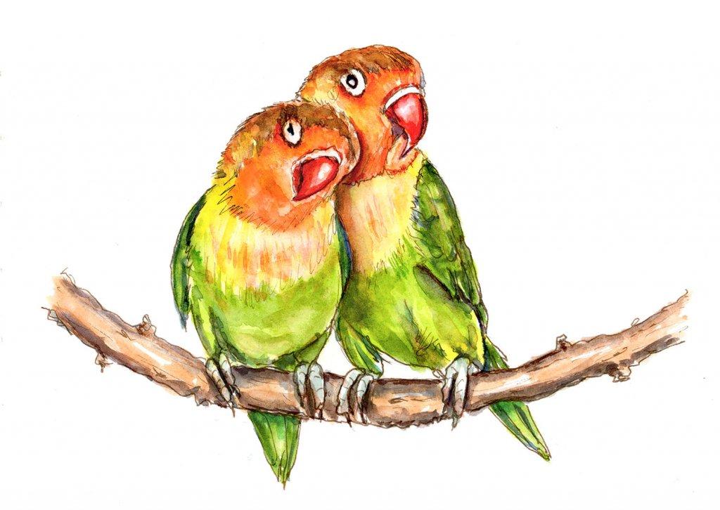 Lovebirds Watercolor Illustration