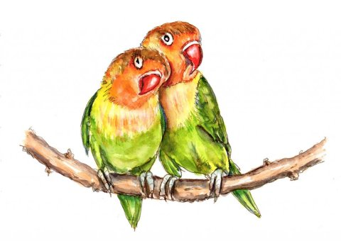 Lovebirds Watercolor Illustration
