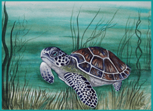 One of the seven species of Sea Turtle, six are endangered, this is the Hawksbill Sea Turtle. 9X12&#