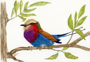 This Lilac Roller is based upon a photo taken by John Williams and used in Colored Pencil Magazine f