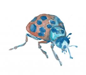 some recent paintings I've done tarantulawatercolorbeeladybug1monstergirls_jpgmothdrip