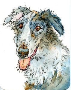 The Borzoi was bred from greyhounds and the Russian sheepdog to create hunter of wolves. They were h