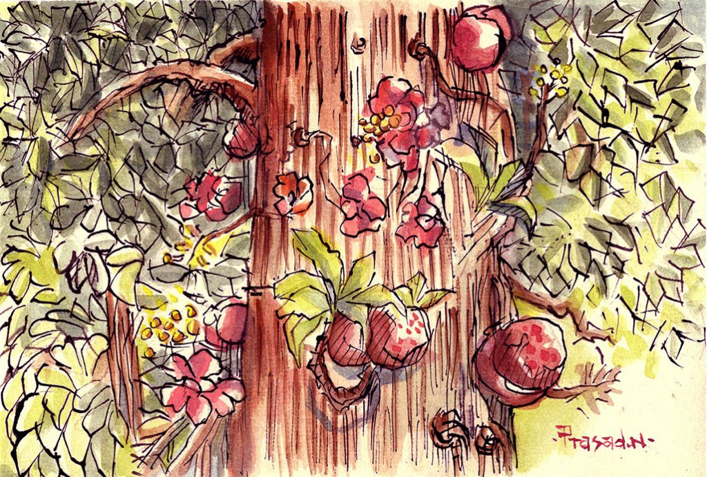 Cannon Ball Tree Watercolor Painting by Prasad Natarajan