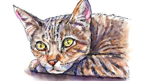 Tabby Cat Watercolor Illustration