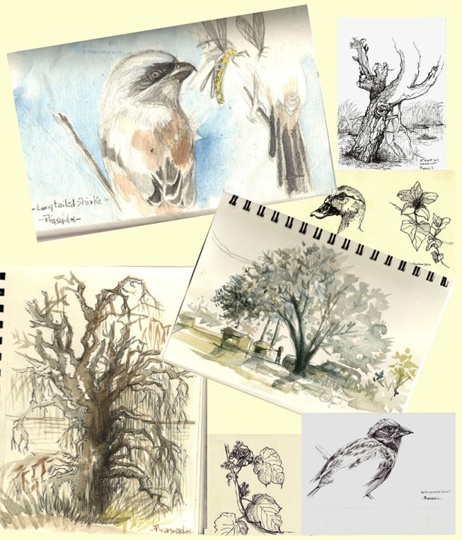 Field sketches wildlife birds by Prasad Natarajan
