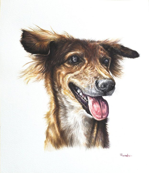 Dog Pet Portrait - Lucky - by Prasad Natarajan