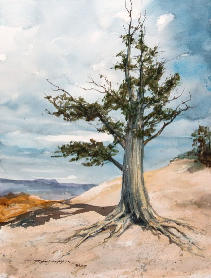 Bristlecone Pine Watercolor Painting by by Rafael DeSoto Jr