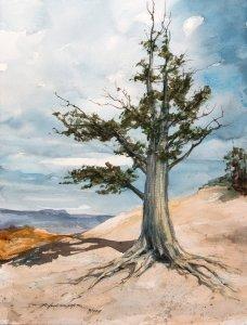 Bristlecone-Pine-at-Bryce-12×16Daylight_On_Woodshed-12×16Old-Latch-Study-10×14My-Frie