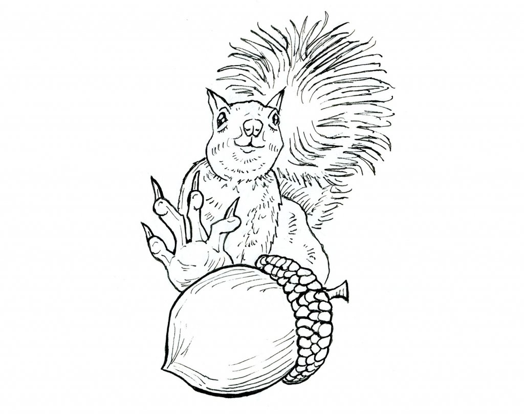 Squirrel Grabbing For Acorn Nut Inktober 2019 Illustration