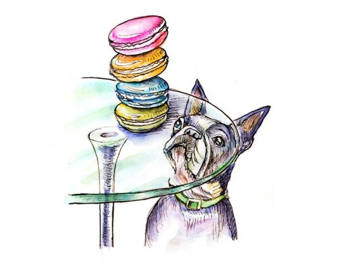 French Bulldog Macarons Watercolor Illustration