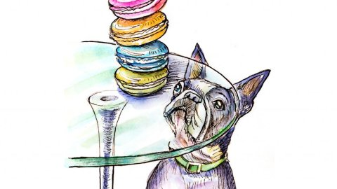 French Bulldog Macarons Watercolor Illustration