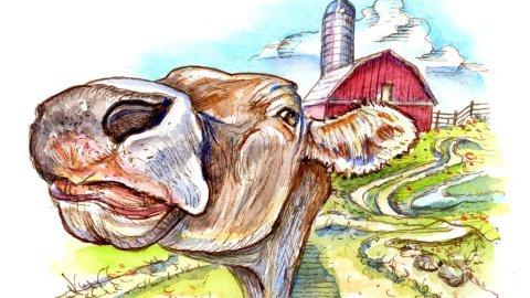Cow Face Barn Farm Inktober Watercolor 2019