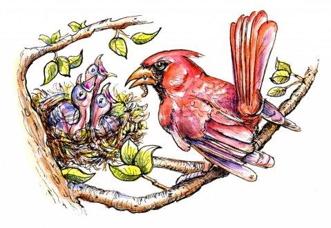 Baby Birds Cardinal Father Feeding Inktober Watercolor Illustration