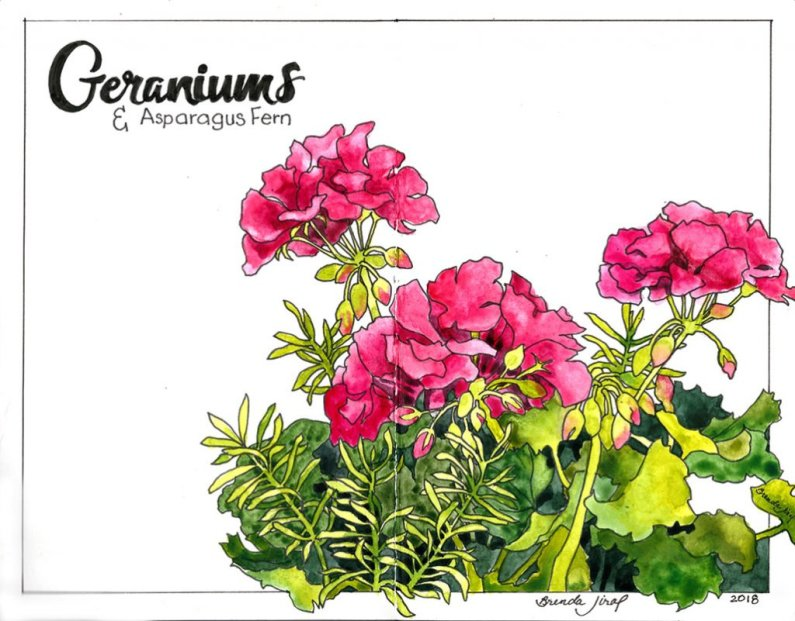 Pink Geraniums watercolor sketch journal