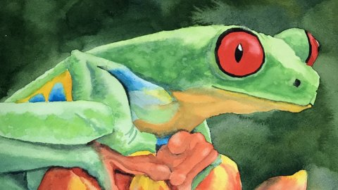 Tree Frog watercolor Brenda Cunningham