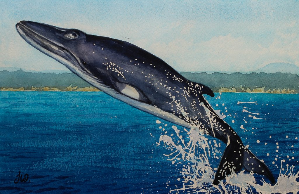 Whale Watercolor by Teresa Whyman Tesartmania