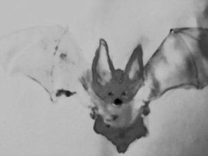 Bat fullsizeoutput_13e