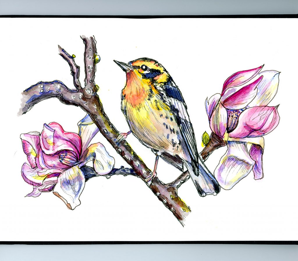Magnolia Flowers And Warbler Watercolor Illustration Sketchbook Detail