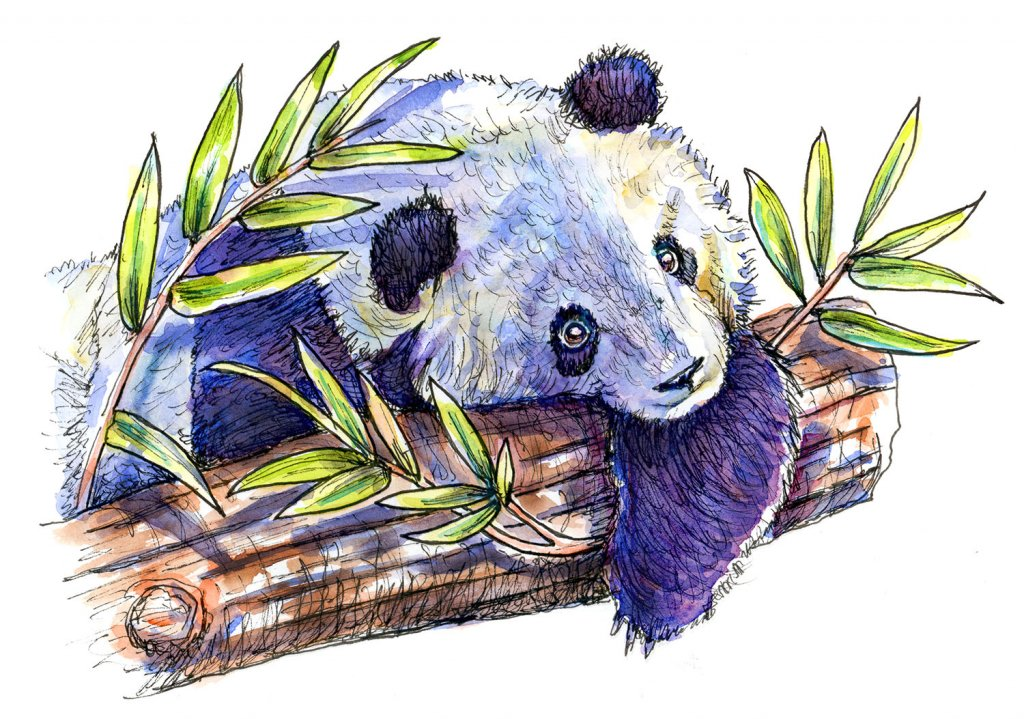 Panda In Tree Bamboo Watercolor Illustration