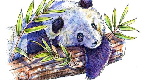 Panda In Tree Bamboo Watercolor Illustration