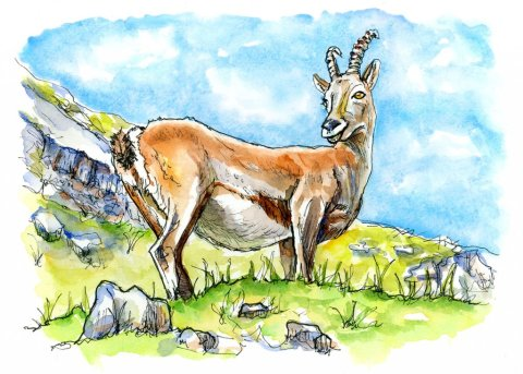 Climb Every Mountain Goat Watercolor Illustration