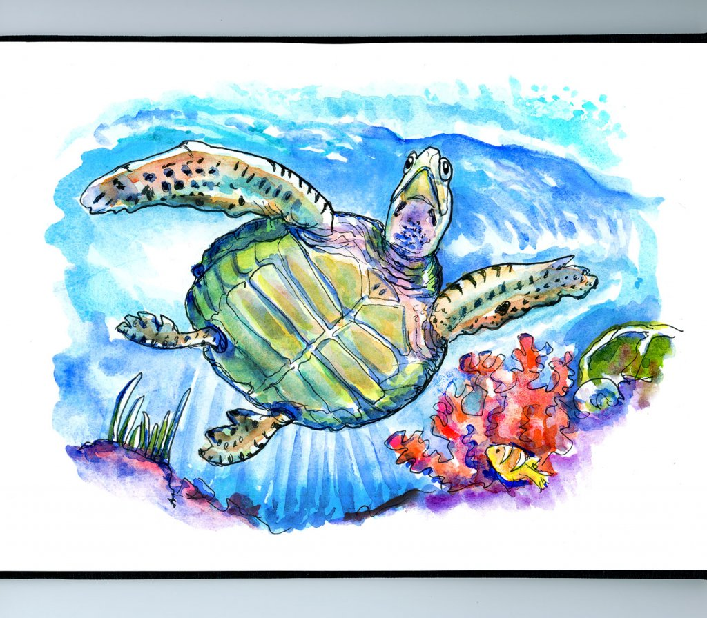 Sea Turtle Underwater Swimming Sky Light Coral Watercolor Painting Sketchbook Detail