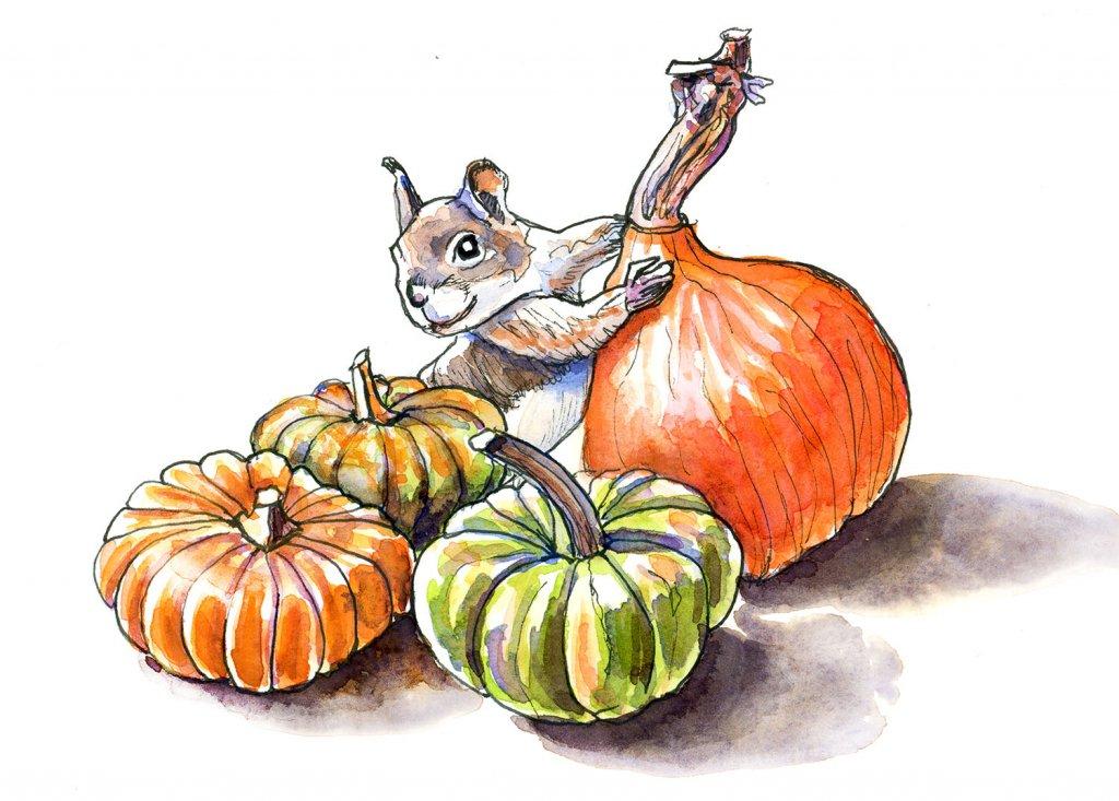 Ornamental Gourds Pumpkins Squirrel Watercolor Illustration