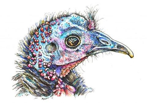 Wild Turkey Head Portrait Watercolor Illustration