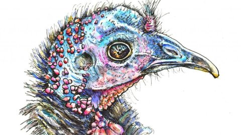 Wild Turkey Head Portrait Watercolor Illustration