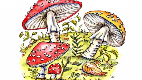 Fly Agaric Mushrooms Watercolor Illustration