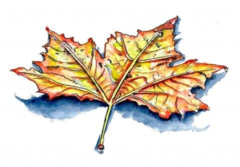 Autumn Fall Leaf Watercolor Illustration