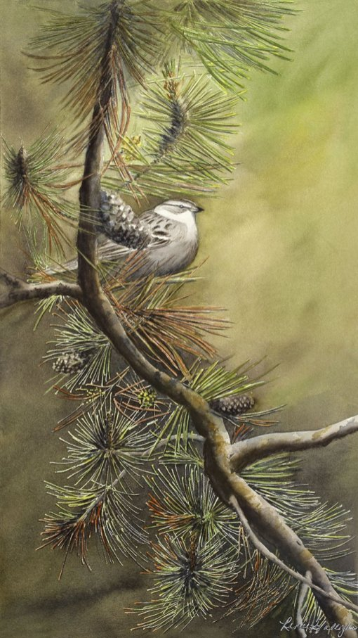 Chipping Sparrow Watercolor Painting by Renee Galligher