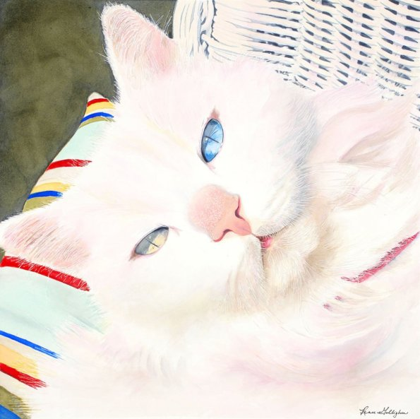 What Cat Different Colored Eyes Watercolor Painting by Renee Galligher