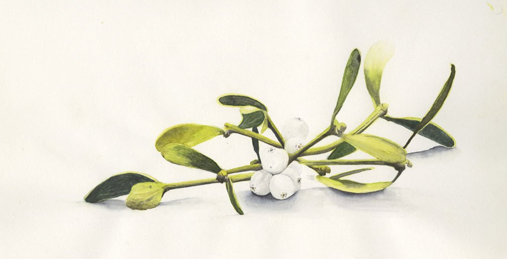 Mistletoe Watercolor Painting
