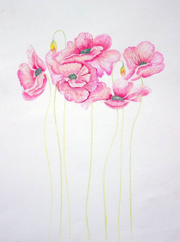 Pink Flowers Watercolour by Atique Ahmed