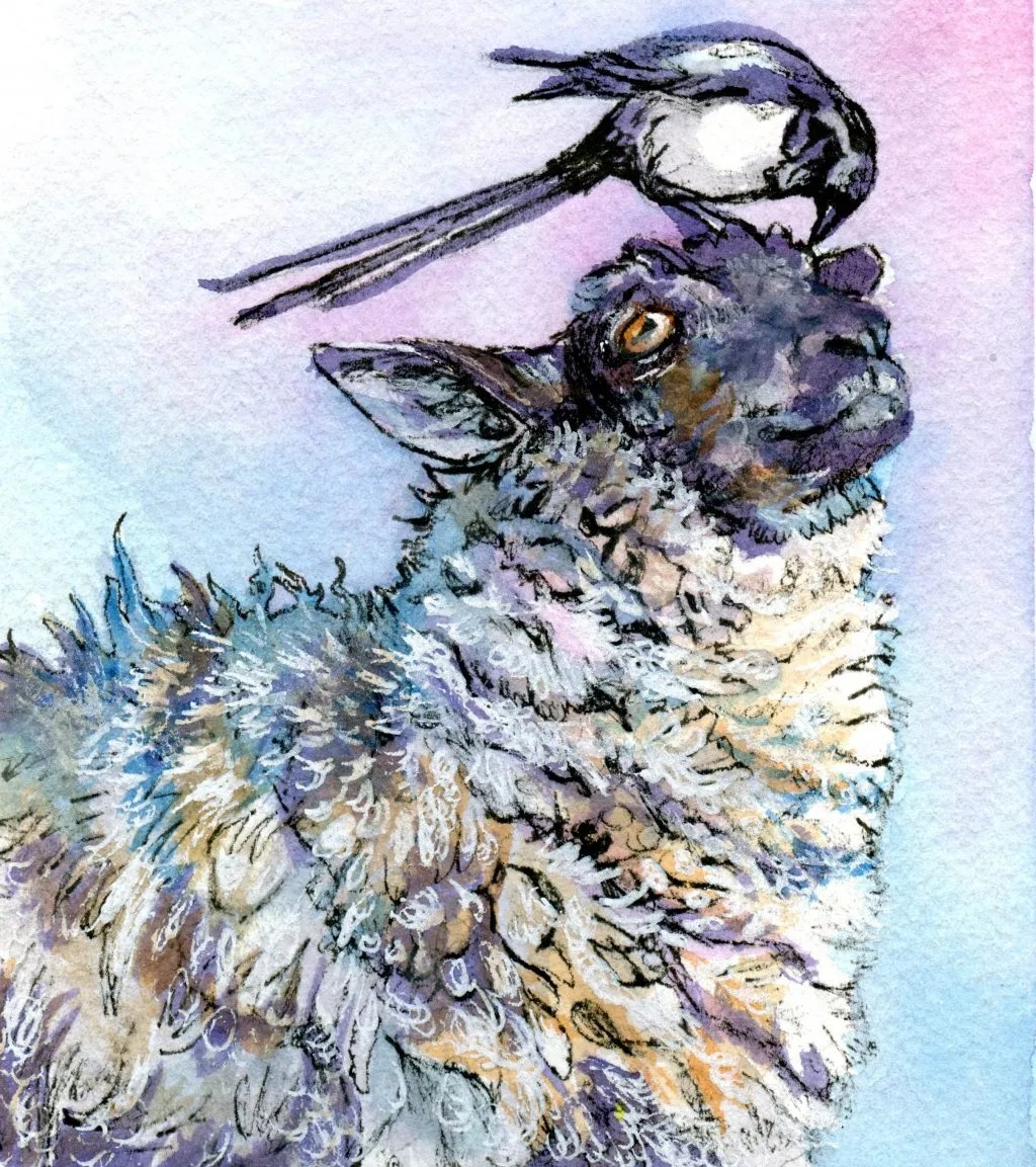 Watercolor painting of sheep and bird