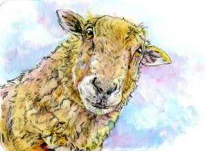 Sheeps Head-Postcard for the Lunch Bag. Zebra Zensations Technical Pen & Daniel Smith Watercolor